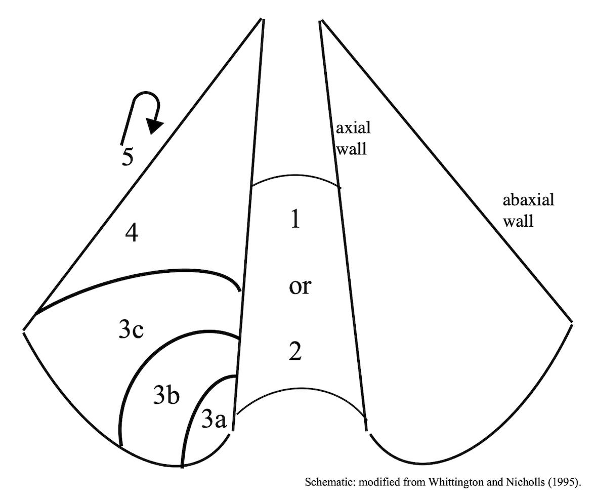 Footscore schematic 0-5